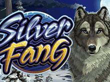 Гарантированные призы в азартном и популярном слоте Silver Fang